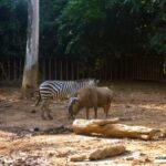 Melaka Zoo