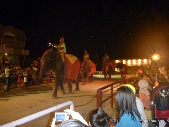 cowboy-town-elephant